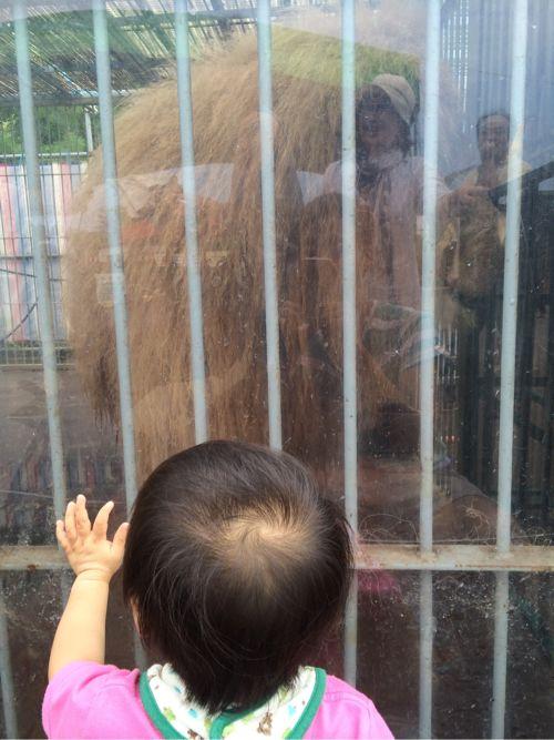 ライオンと息子くん